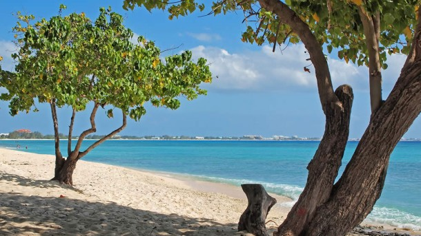 grand-cayman-island-trees